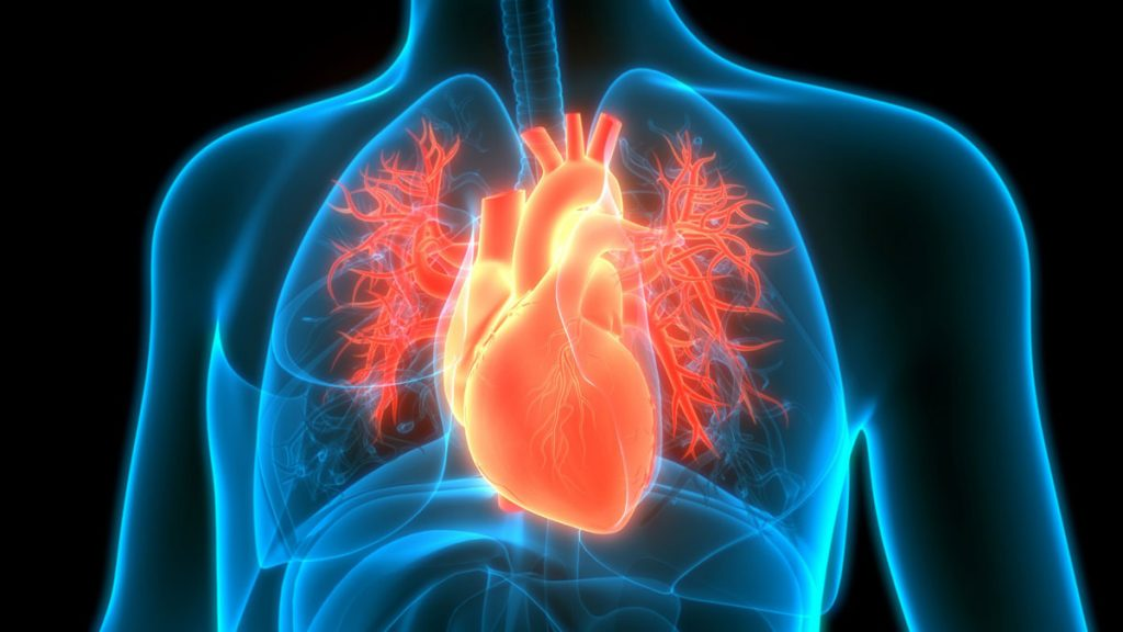 پزشک متخصص قلب و عروق در شیراز